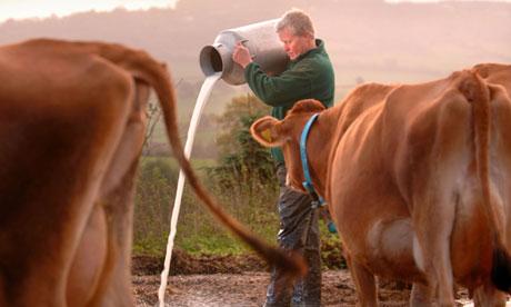 Dairy farmer throws away milk
